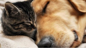 this-is-love-dog-sleeping-with-cat